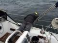 Tja, Seefahrtist nicht gleich Binnenschipperei :-)